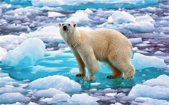 배경 화면 노르웨이, 얼음, 눈, 북극곰