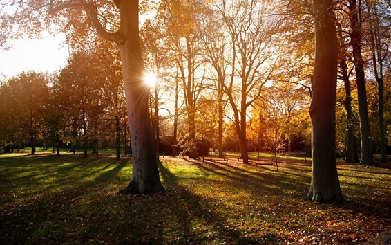 Wallpaper Park, trees, autumn, sunset, shadow