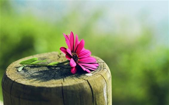 배경 화면 그루터기에 보라색 꽃