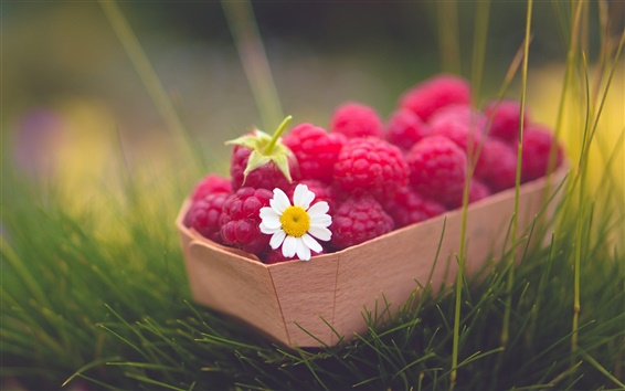 Wallpaper Red raspberries, berry, daisy, grass, green