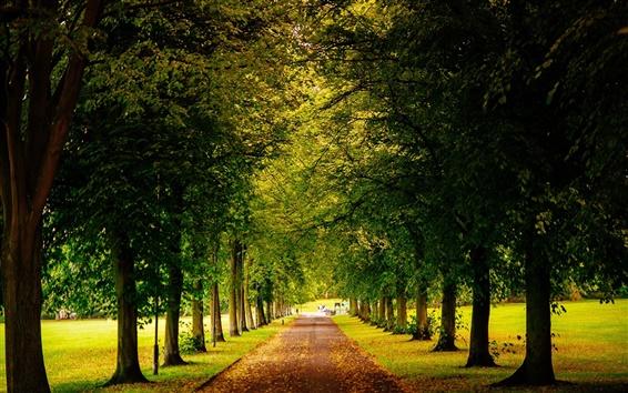 Fondos de pantalla Sheffield, Inglaterra, parque, árboles de la carretera, otoño, hojas amarillas