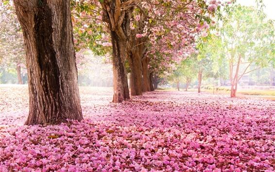 壁紙 木、道路、地上に多くのピンクの花
