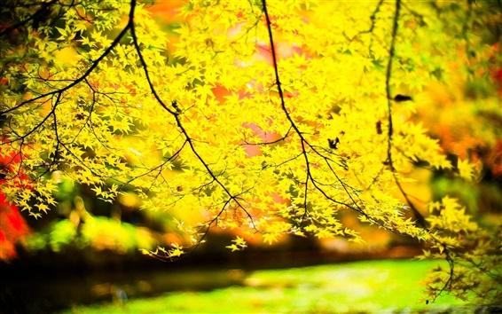 Обои Желтые листья, ветки, солнце, размытие