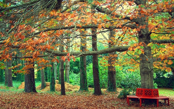 Wallpaper Autumn park, yellow leaves, bench