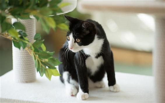 배경 화면 고양이는 뭔가 검정, 흰색을 찾아