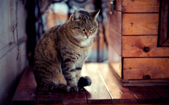 Обои Взгляд Кошка, древесных плит, сидя