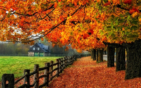 Wallpaper Colorful autumn, red leaves, path, grass, house
