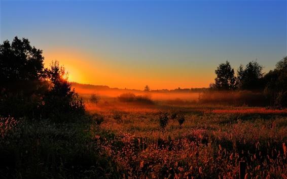 Обои Рано утром, на рассвете, солнце, туман, поля, деревья, природа