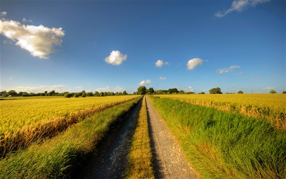 Wallpaper Footpath, road, sunny day, fields, clouds, summer