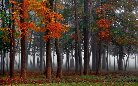 Fond d'écran Forêt, brouillard, automne, arbres