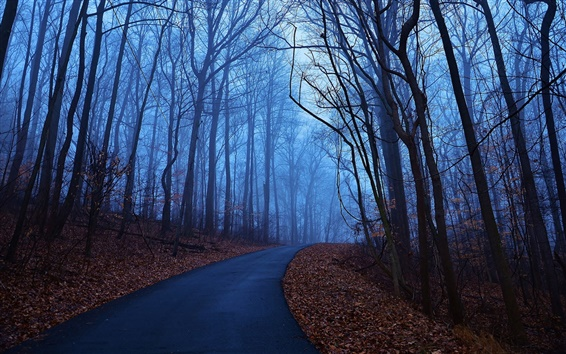 Wallpaper Forest trees, autumn morning, dawn, blue, fog, leaves, road