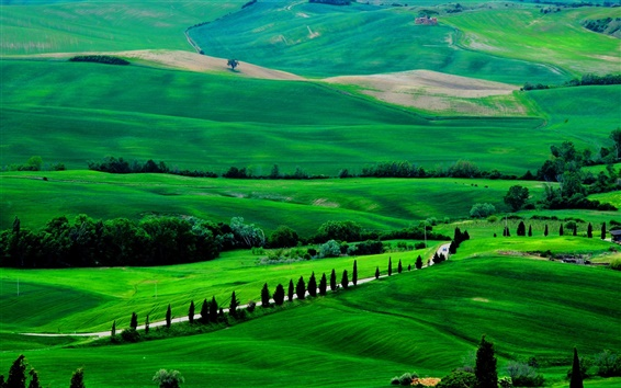 Обои Италия, Тоскана, весна пейзажи, поля, дороги, деревья, зеленый