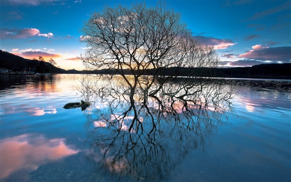 Wallpaper Lake, trees, water reflection, sunset