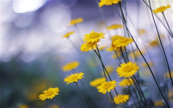 배경 화면 작은 노란색 꽃의 매크로 사진