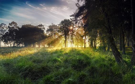 Wallpaper Morning landscape, sky, rays, sun, grass, forest