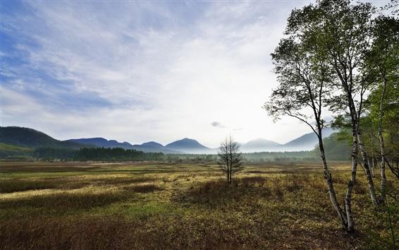 Fondos de pantalla Montaña, valle, árboles, abedul, niebla, mañana