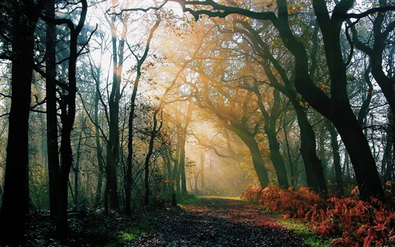 Wallpaper Nature forest, morning, autumn, road, light rays, sun