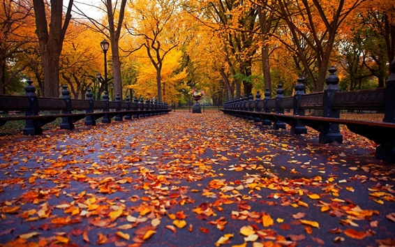 Wallpaper New York, autumn park, walk road, bench, yellow leaves, trees