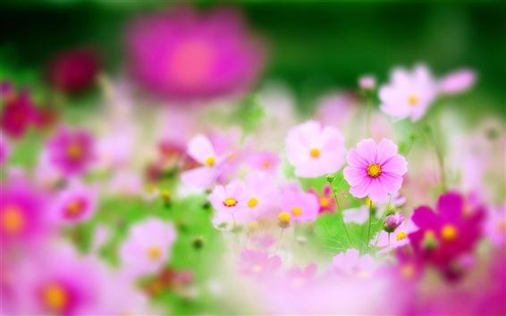 壁紙 ピンクの花、フォーカス、ぼやけ