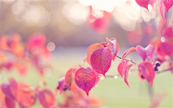 Wallpaper Pink leaves, autumn, dew