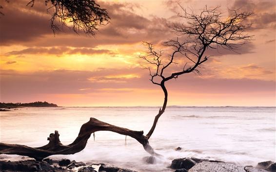 Fond d'écran Mer, côte, arbre, coucher du soleil, Hawaï, États-Unis