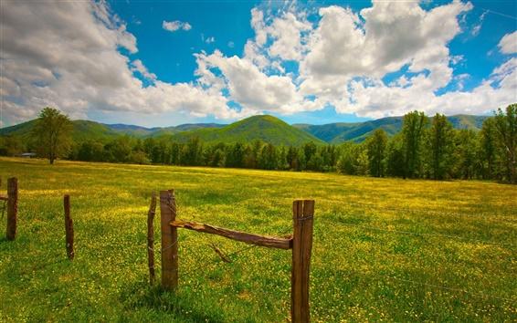 Wallpaper Summer landscape, grass, yellow flowers, fence, hills, clouds