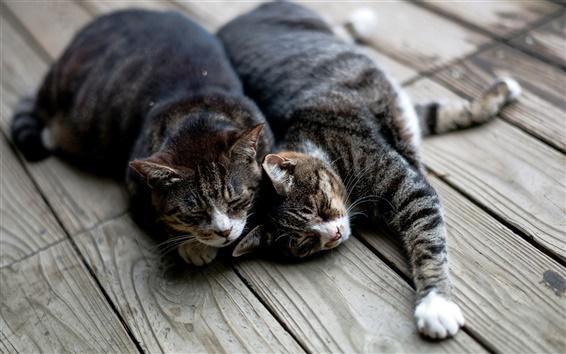 Papéis de Parede Dois gatos dormir na placa de madeira