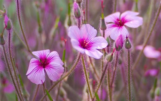 Fondos de pantalla Flores silvestres, pétalos de rosa, brotes