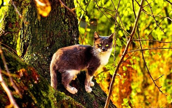 Fondos de pantalla Wildcat en el bosque, la luz del sol