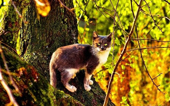 Wallpaper Wildcat in the forest, sunlight