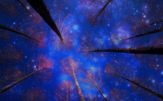 Wallpaper Winter snow, sky, night, trees, blue