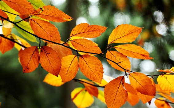 Wallpaper Yellow leaves, branch, tree, bokeh, fall, nature