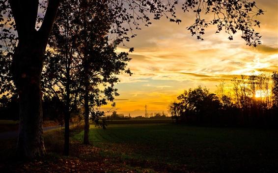Обои Осень, поля, деревья, вечер, закат, красивые пейзажи