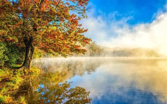 Обои Осенний пейзаж, туман, природа, озеро, лес