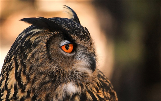 Papéis de Parede Pássaro, coruja, vista lateral