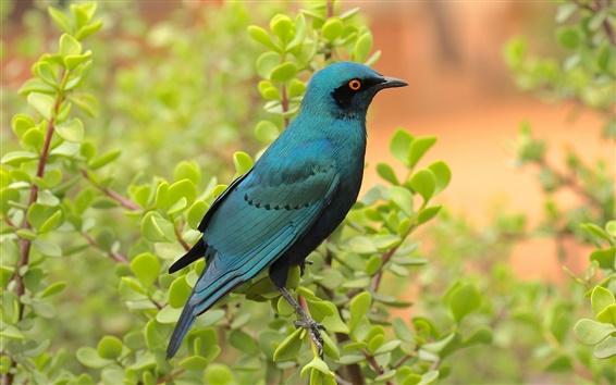 Wallpaper Blue bird in the bush