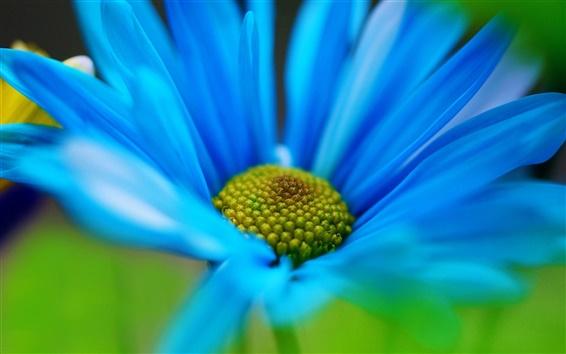 Wallpaper Blue flower close-up