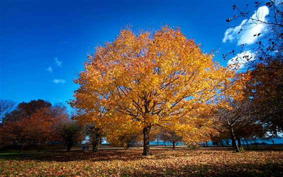 Wallpaper Chicago, park, promenade, fall, trees, yellow leaves