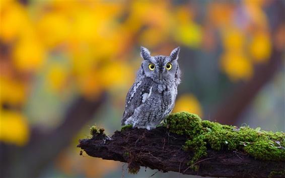 Wallpaper Cute little owl, moss, nature
