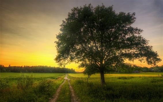 Обои Поля, дорога, дерево, утро, весна