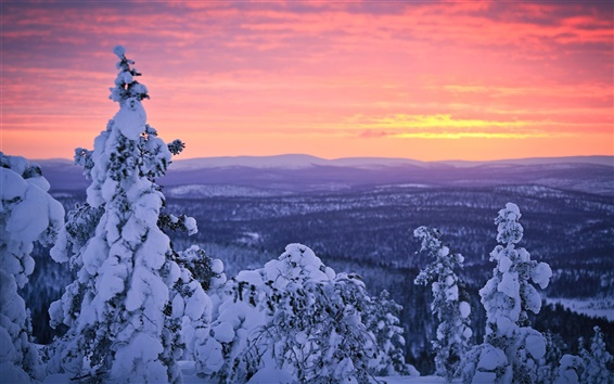 Wallpaper Finland, Lapland, winter snow, forest, sunset, sky