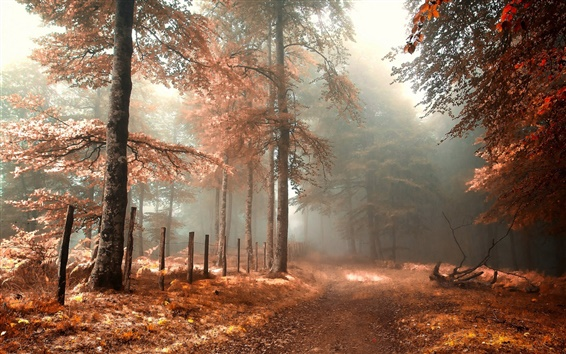 Wallpaper Forest, road, fence, fog, red, autumn landscape