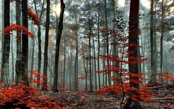 Wallpaper Forest, trees, autumn, fog, morning