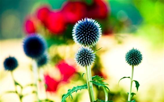 Обои Как шаровые цветы, боке