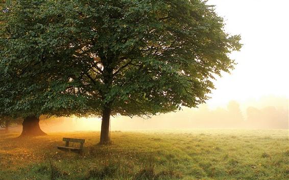 Fond d'écran Parc du matin, prairie, arbres, banc, brouillard, automne