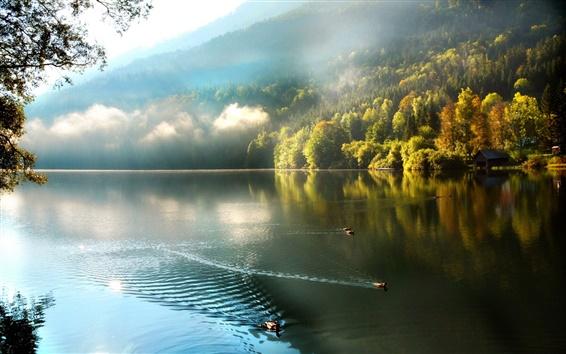 Fond d'écran Montagnes, forêt, brouillard, lac, canards, matin