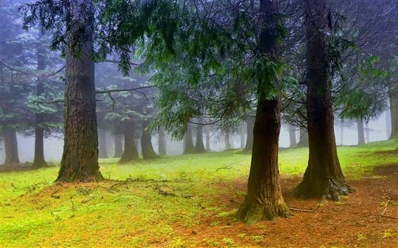 Fond d'écran Nature paysage, forêt, arbres, matin, brume, brouillard