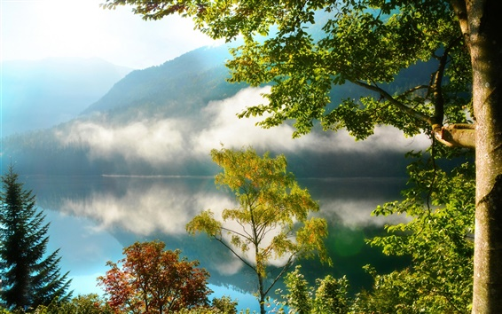 Wallpaper Nature scenery, mountains, forest, trees, lake, mist, morning, reflection