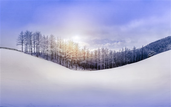 Wallpaper Nature winter, forest, snow, hill, sky, sun rays