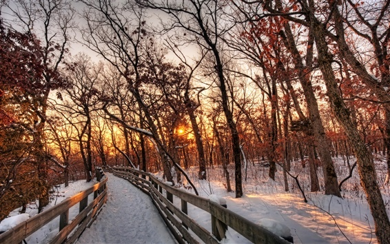 Wallpaper Nature winter landscape, snow, forest, trees, path, sunset
